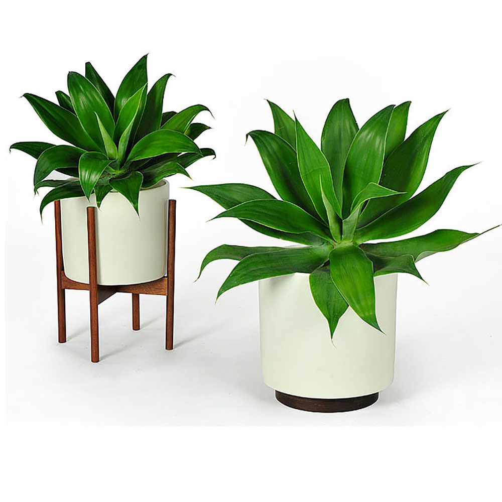 Top3 by design modernica modernica cs cylinder wood for Design indoor plant pots uk