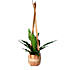 cindy lee leatherplanter copper pot 800