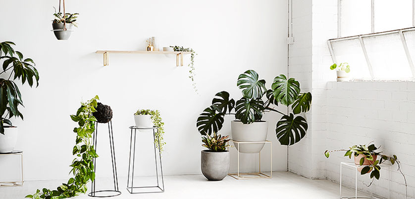 Ivy Muse Planters